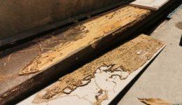 Zimmererarbeiten - Schadensersatzpflicht bei Nichterkennen von Schädlingsbefall