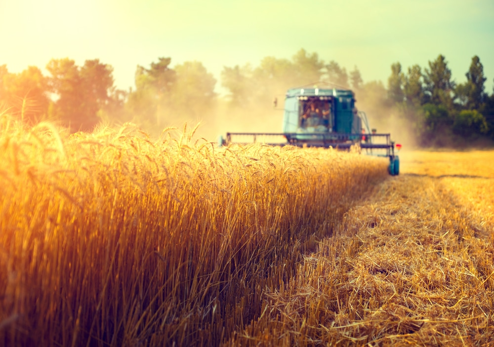 Harvester,Machine,To,Harvest,Wheat,Field,Working.,Combine,Harvester,Agriculture